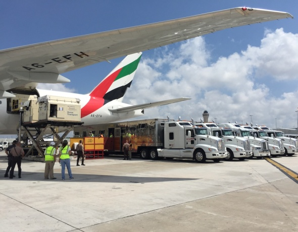 Emirates letecký transport koní