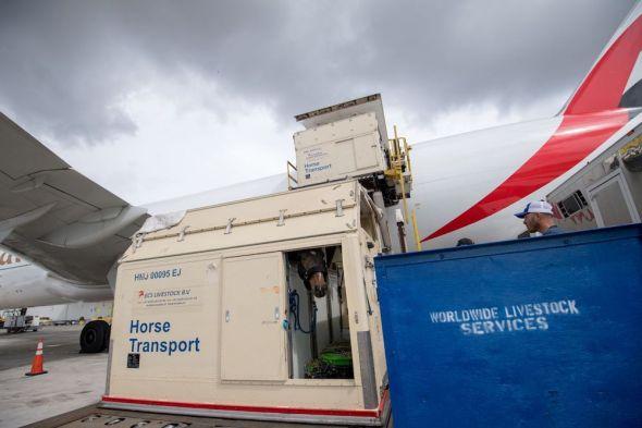 Emirates SkyCargo přepravil koně